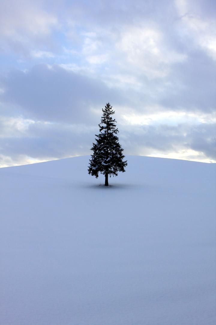 1月のクリスマスツリー