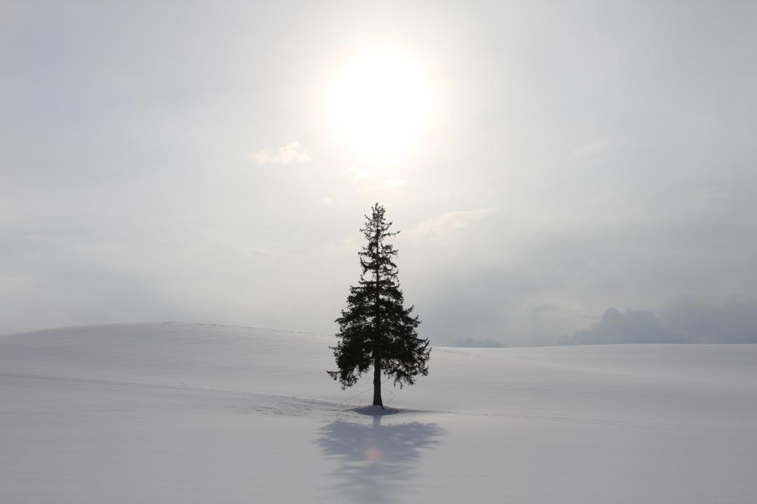 2月のクリスマスツリー